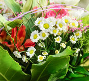 Summer bouquet with camomile ,lilies and roses Royalty Free Stock Photo