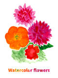 Summer bouquet of colorful flowers. Hand drawn watercolor floral Royalty Free Stock Images
