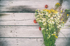 Summer bouquet of daisies and Hypericum Royalty Free Stock Images
