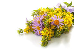 Summer bouquet of daisies and loosestrife Stock Image