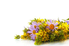 Summer bouquet of daisies and loosestrife Royalty Free Stock Image