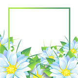 Summer bouquet of flowers Royalty Free Stock Photos