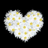 Summer bouquet heart shape made from daisy, sketch Stock Photo
