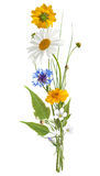 Summer bouquet isolated on white. (without shadows stock photography