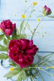 Summer bouquet of peony flowers of dark burgundy color. On pale blue boards. Selective focus. Vertical royalty free stock image