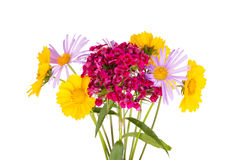 Summer bouquet on white background Royalty Free Stock Photography