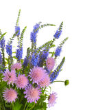 Summer bouquet of wildflowers. On a white background stock images