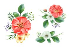 Free Summer Bouquet With Red Rosehip, Small Flowers, Leaves Stock Photography - 185945022