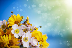 Summer bouquet of yellow daisies. On a blue background Royalty Free Stock Image