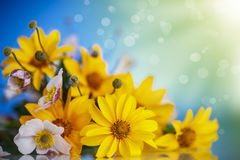 Summer bouquet of yellow daisies. On a blue background Royalty Free Stock Photo