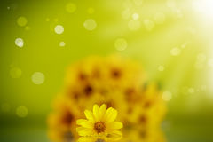 Summer bouquet of yellow daisies. On an green background Stock Photos