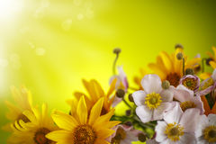 Summer bouquet of yellow daisies. On an green background Royalty Free Stock Photography