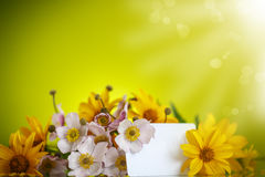 Summer bouquet of yellow daisies. On an green background Royalty Free Stock Images