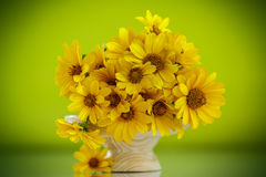 Summer bouquet of yellow daisies. On an green background Stock Image