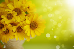 Summer bouquet of yellow daisies. On an green background Royalty Free Stock Photos