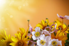 Summer bouquet of yellow daisies. On an orange background Royalty Free Stock Photography