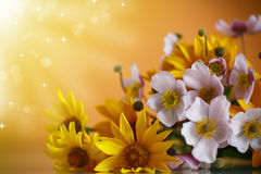 Summer bouquet of yellow daisies. On an orange background Stock Images