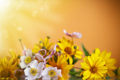 Summer bouquet of yellow daisies. On an orange background Royalty Free Stock Photo