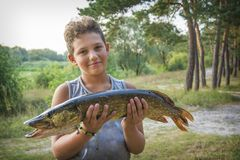 In summer, the boy holds a big pike royalty free stock photos