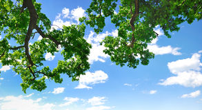 Summer branch with blue sky and clouds Stock Photo