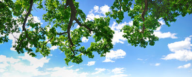 Summer branch with blue sky and clouds Royalty Free Stock Photos