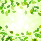 Summer branches with fresh green leaves Stock Images