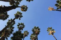 Summer Breeze. Some palms in the sky royalty free stock image