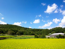 Summer Breeze. The stunned scenery in Japan rural area Royalty Free Stock Image