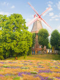 Summer in Bremen Royalty Free Stock Images