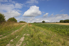Summer bridleway Royalty Free Stock Image