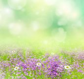 Natural background. Royalty Free Stock Photography