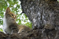In the summer a cat sits on the tree. Royalty Free Stock Images