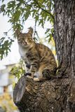 In the summer a cat sits on the tree. Stock Image