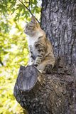 In the summer a cat sits on the tree. Royalty Free Stock Photo