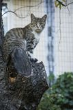 In the summer a cat sits on the tree. Stock Photo