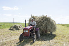 Summer bright sunny day a man carries hay on a tractor trailer. Stock Image