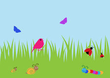 Summer bugs and bird background. Cute summer background of ladybird, snail butterfly and bird, with space for copy / text Royalty Free Stock Photo
