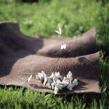 Summer butterflies Stock Photo