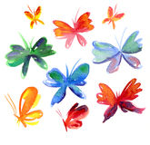 Summer  butterfly Royalty Free Stock Images
