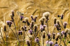 Summer buzz on Field Wildflowers.  stock photos