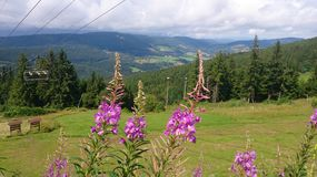 Summer cable car. Summer mountain landscape in the Vosges. Mountain flower and cable car of the ski slopes in winter Stock Image