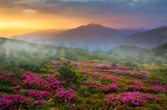 Summer Carpathian landscape stock photo