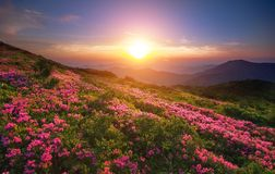 Summer Carpathian landscape Royalty Free Stock Images