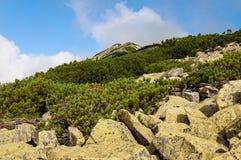 Summer Carpathian Mountains, the ridge Gorgan Stock Photo
