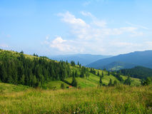 Summer in Carpathian mountains, Ukraine Royalty Free Stock Image