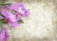 Summer Carpathian violet wild flowers on a river stone. royalty free stock photography