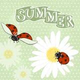 Summer cartoon background with ladybugs. Royalty Free Stock Photo