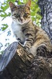 In the summer a cat sits on the tree. Royalty Free Stock Image