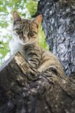 In the summer a cat sits on the tree. Stock Photography