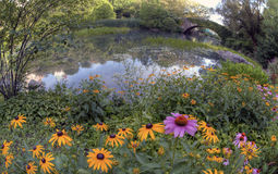 Summer in Central Park by the pond with flowers Stock Images